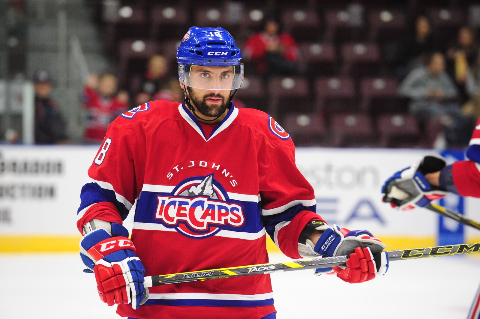Angelo Miceli (Photo by St. John's IceCaps)
